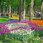 Пан тюльпан!!! (Кропивницкий)- 1.05.19
