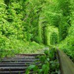 Тоннель любви + замки Волыни- (31.05-2.06)- 2 дня