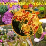 Бал Хризантем+парк Горького-20 октября